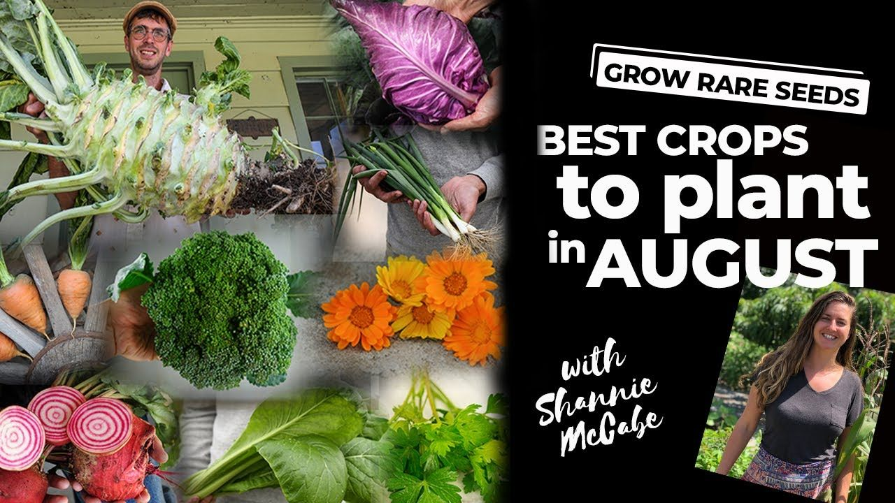 Grow Rare Seeds Best Crops To Plant In August Youtube 400 x 300