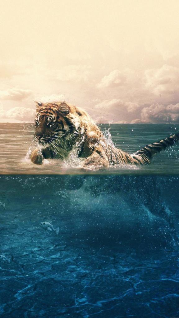 Wallpaper For Iphone X Iphone 6 4k Wallpaper 4 4k Hd Animal Wallpaper Iphone Wallpaper Ocean Tiger Wallpaper