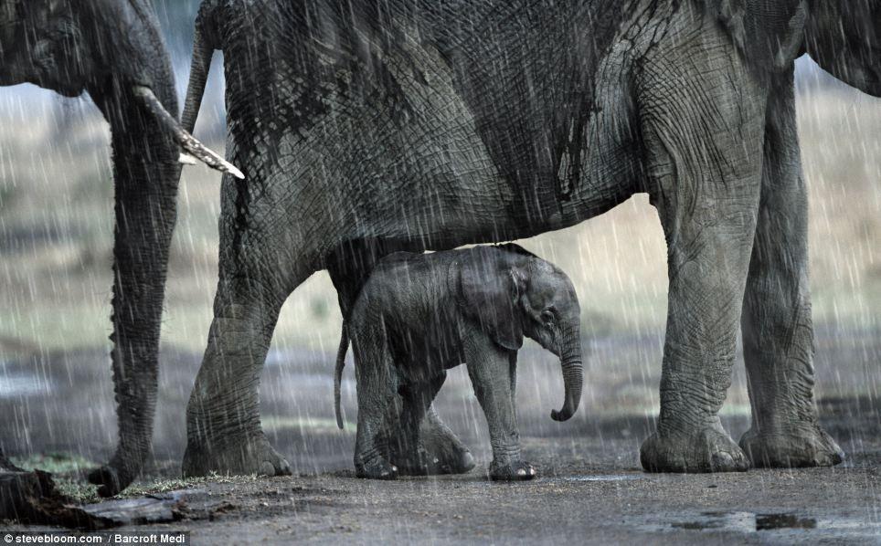 elefanter i regn :D