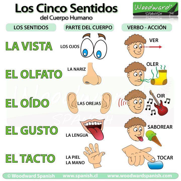 Spanish elementary science los cinco sentidos del cuerpo for El divan de los sentidos