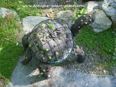 This Topiary Turtle is an amusing little creature covered with succulent plants; make one for a fun focal point in your garden...