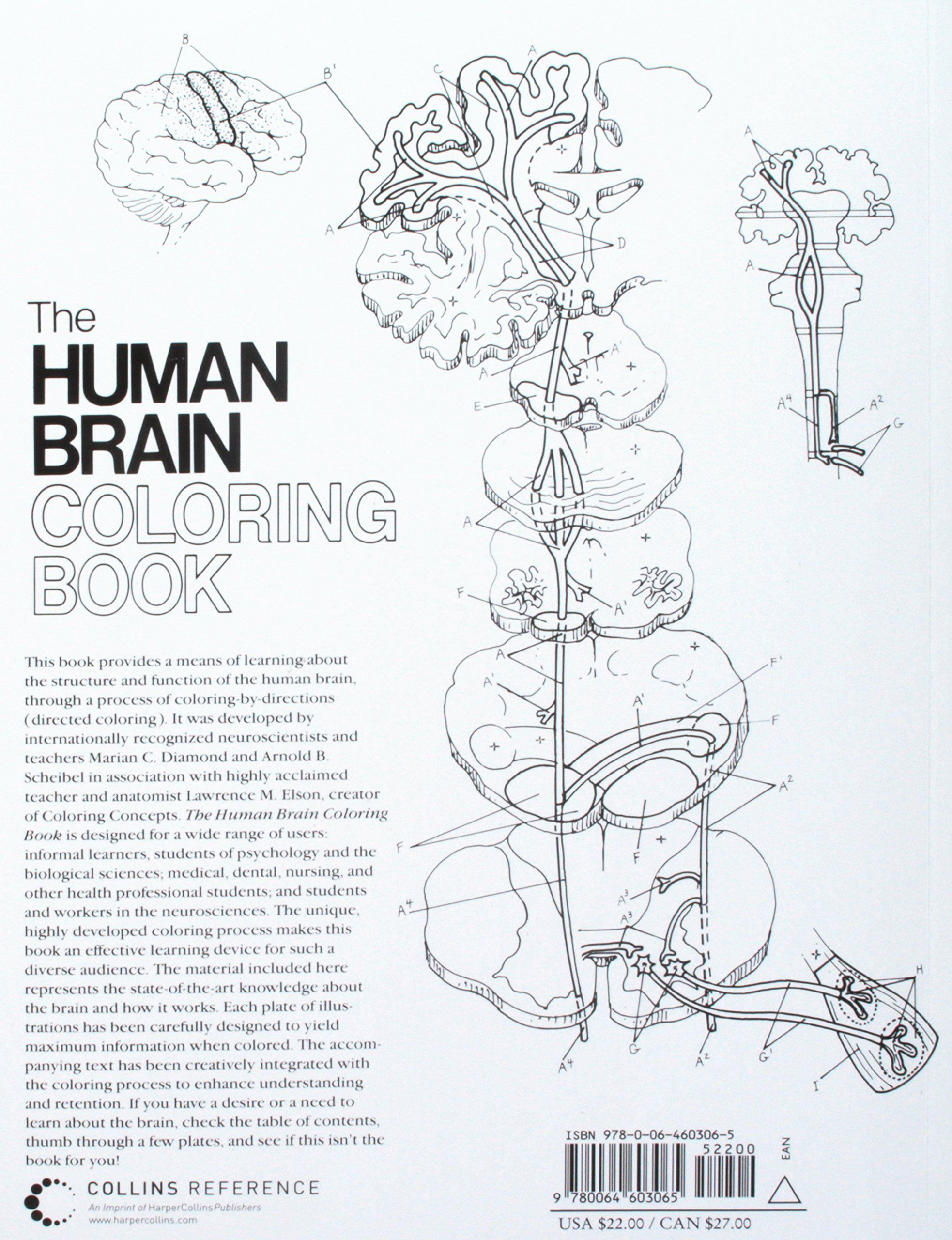 Human Brain Coloring Book Best Of The Human Brain Coloring Book Coloring Concepts Series Ad Coloring Books Anatomy Coloring Book Coloring Pages