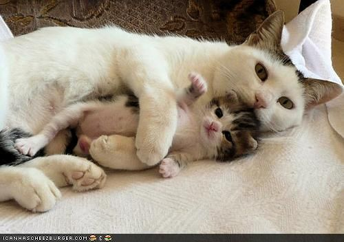 mama will protect me Baby animals, Cats and kittens