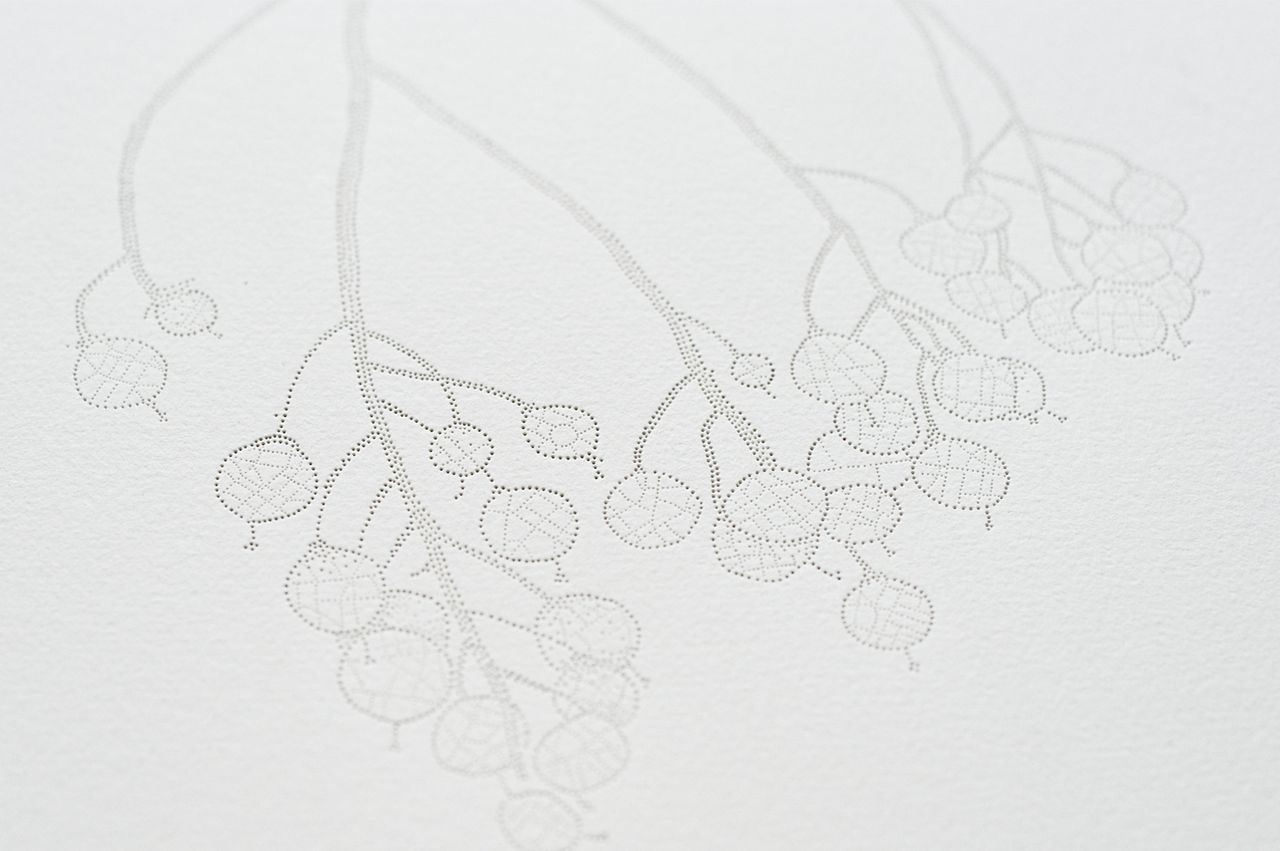 Pinprick drawings by Melbourne artist Miso   Yellowtrace.