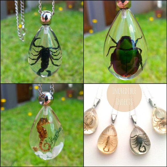Image result for real bugs in jewellery -etsy