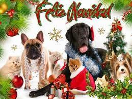Desde Asoka Castalla Os Deseamos A Todos Felices Fiestas Con Un Poco De Retraso Y Sobretodo Feliz Feliz Feliz 20 Felices Fiestas Navidad