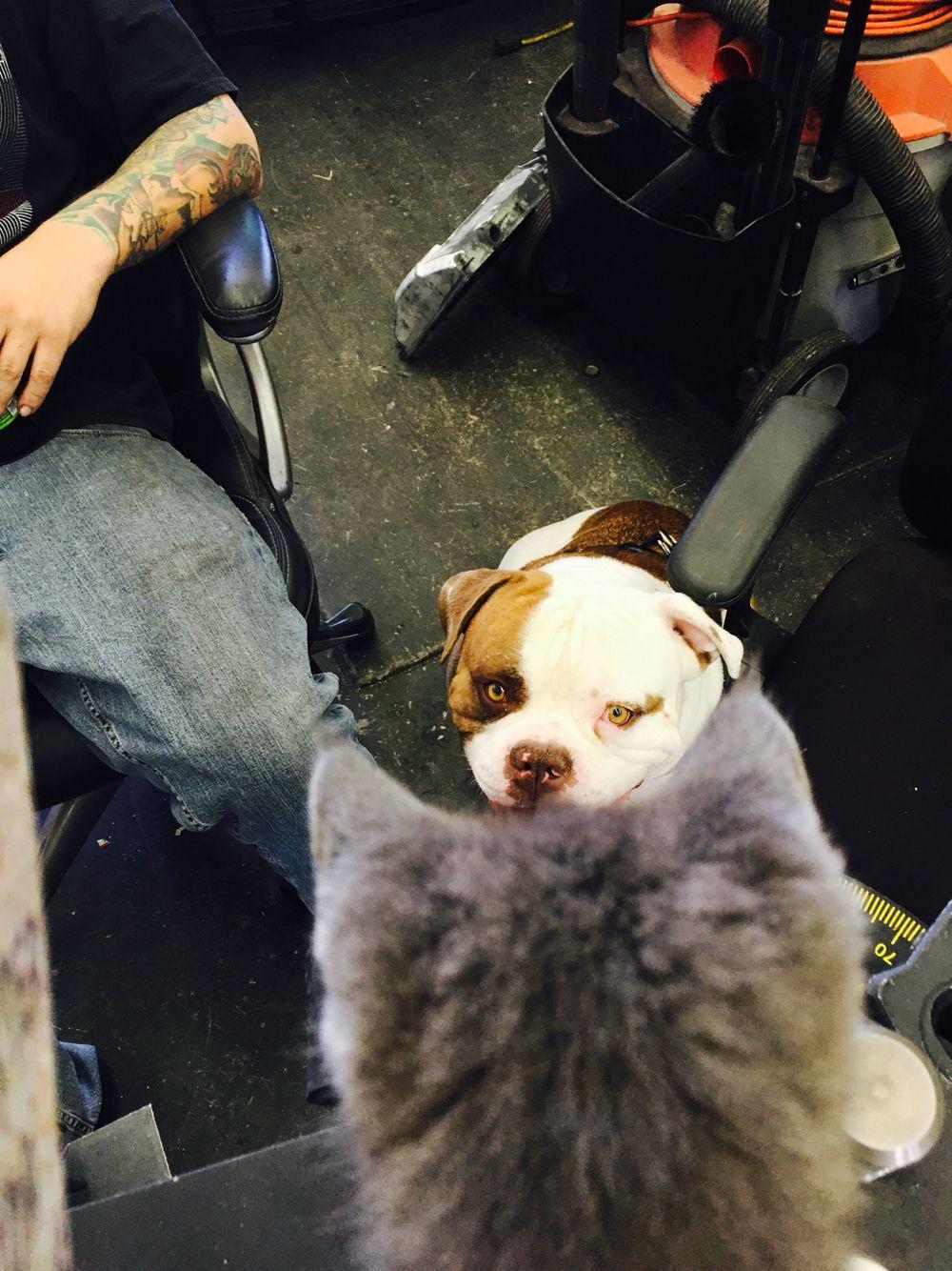 Zeus loves Betsey!
