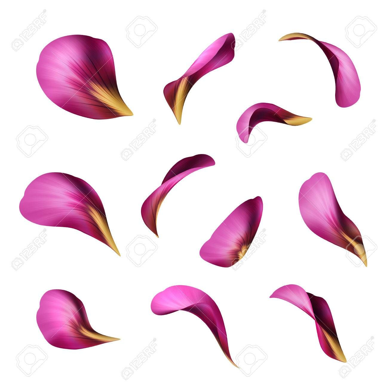 Purple Flower Petals Botanical Illustration Floral Clip Art Flower Petal Art Flower Petals Rose Petals Drawing
