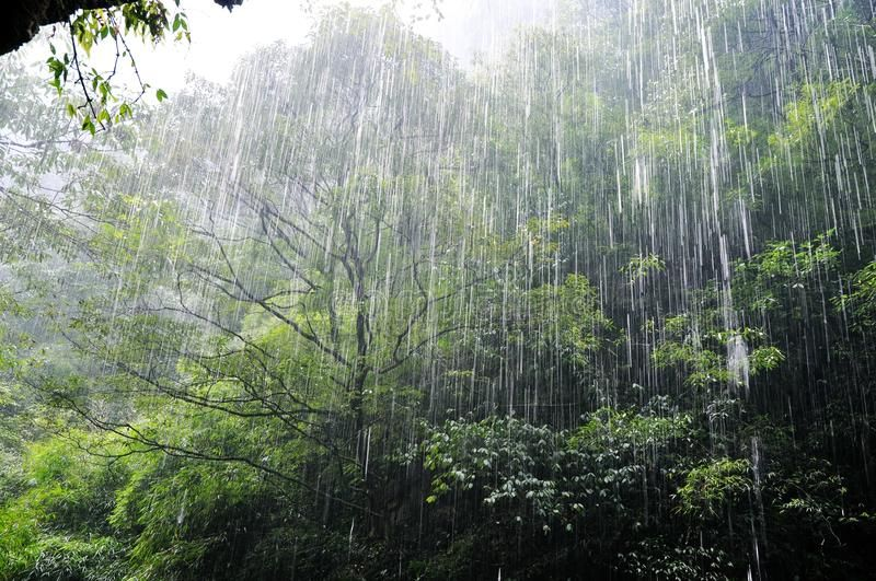 Photo about A heavily rain is running in the forest. Image of humidity,  nature, rain - 26048096 | Leaf images, Running in the rain, Rainforest trees