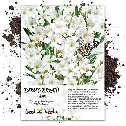 Amazon Com Seed Needs White Baby S Breath Gyposophila Elegans 2 000 Seeds Babys Breath Plants Garden Outdoor Baby S Breath Plant Babys Breath Seeds