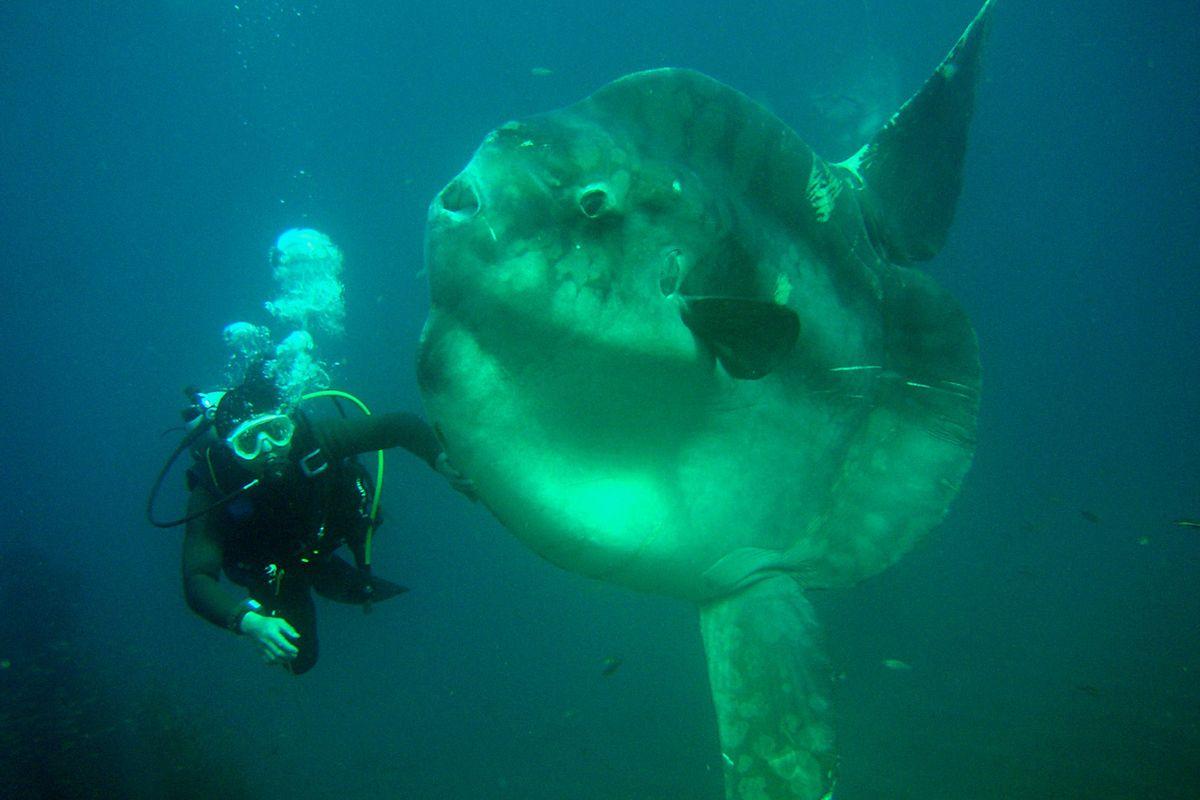 Forrás: Hasama Underwater Park