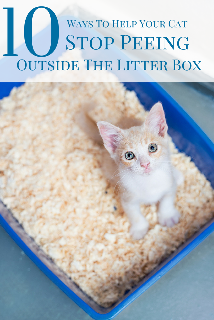 Top 10 Ways To Stop Your Cat From Peeing Outside The Litter Box Cat Training Litter Box Litter Box Cat Training