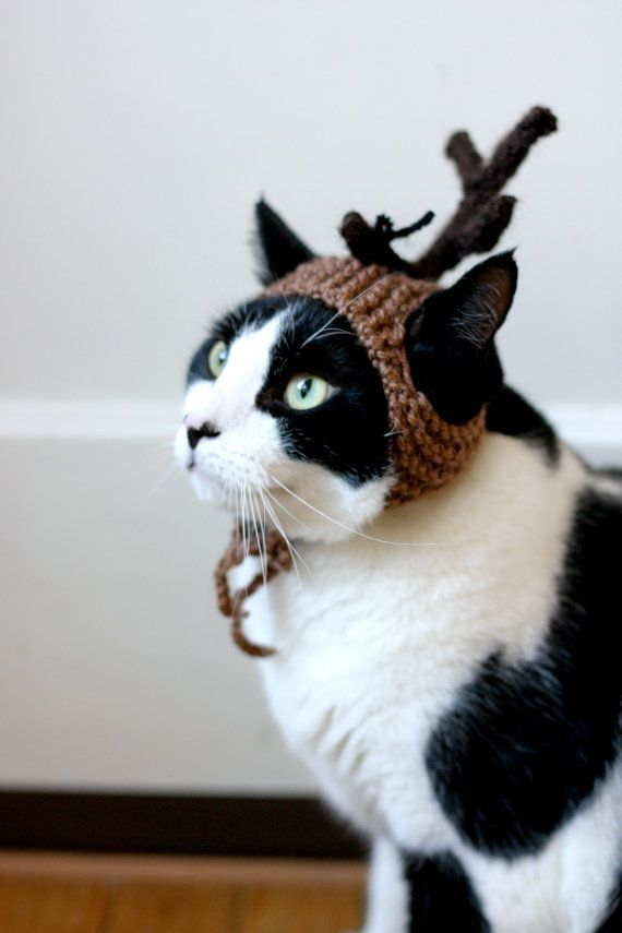 Max the Dog Grinch Cat Hat Christmas Dr Seuss by scooterKnits & Max the Dog Grinch Cat Hat Christmas Dr Seuss by scooterKnits ...