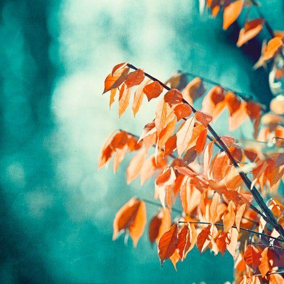 Teal Orange Photography Turquoise Coral Aqua Nature Print
