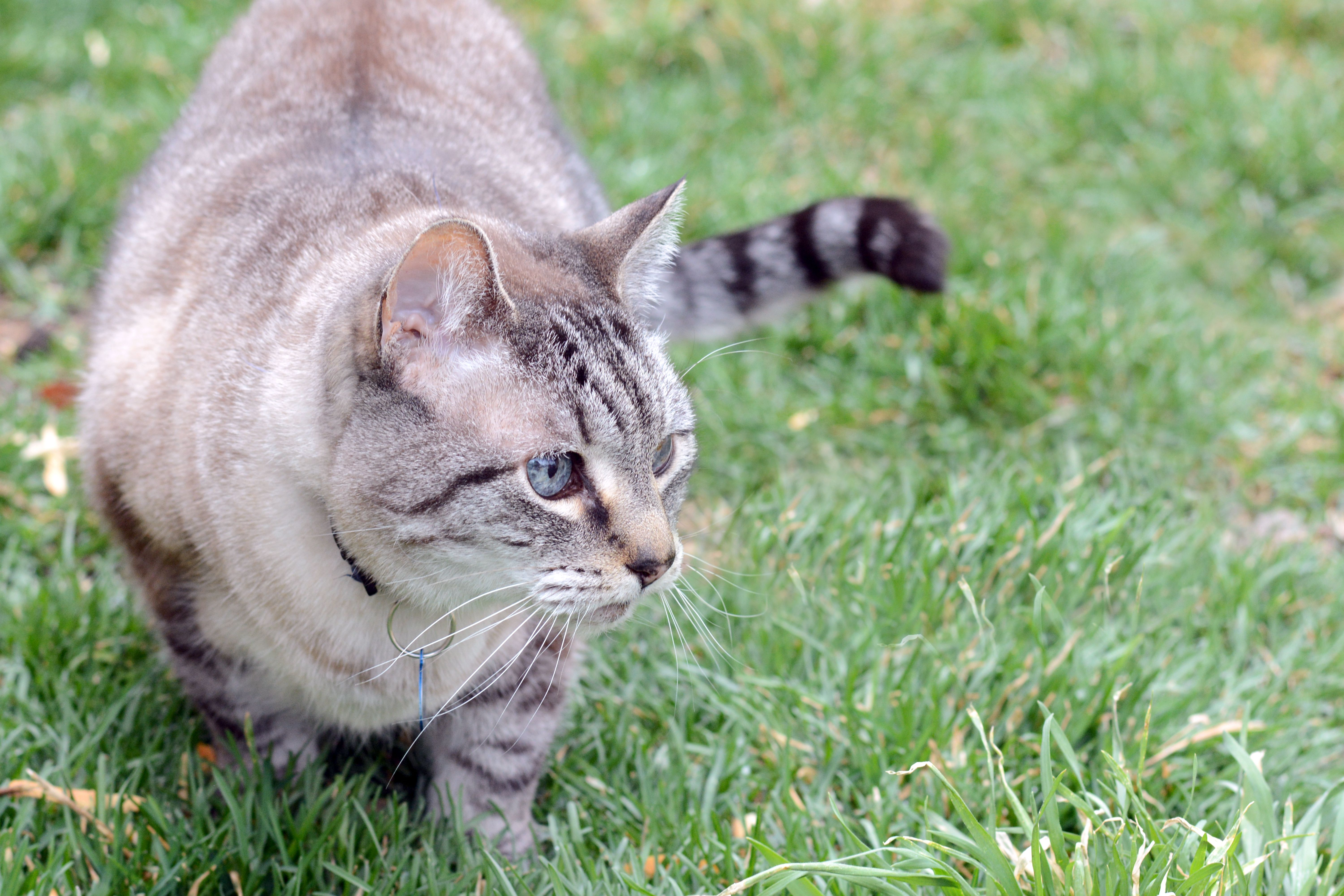 How to Get Rid of a Cat Urine Smell Outside | Cuteness.com ...
