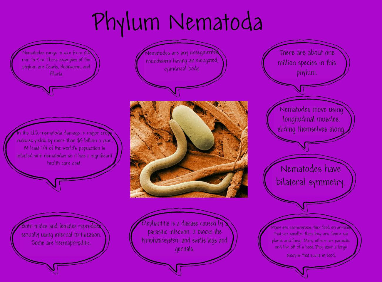 Phylum Nematoda Phylum Nematoda Pinterest