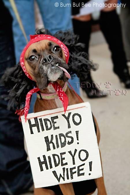 Pin By Jessica Beaty Jones On Funnies Pet Parade Dog Parade