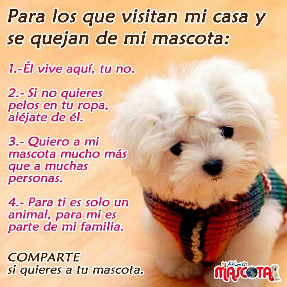 Amo A Mi Perro Perros Frases Cachorros Graciosos Y Perros