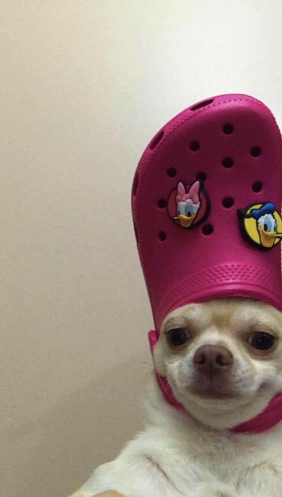 Wallpapers Cute Animal Memes Funny Dog Memes Animal Memes