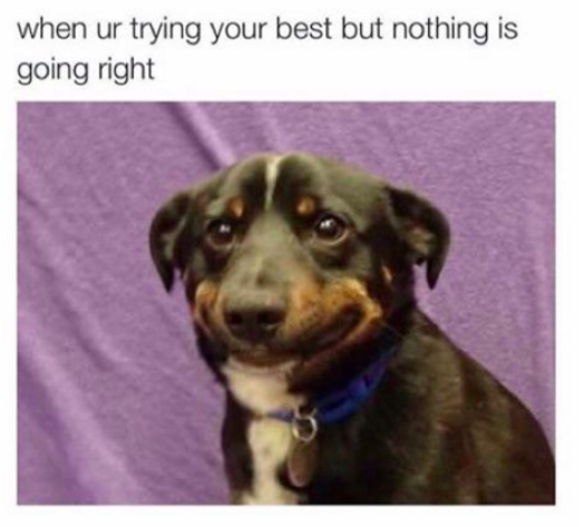 Whatever You Do Don T Beat Yourself Up For Saying Sorry Funny Pictures Funny Memes Animal Memes