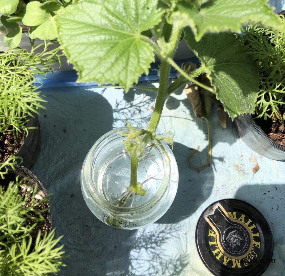 ボード 家庭菜園 のピン