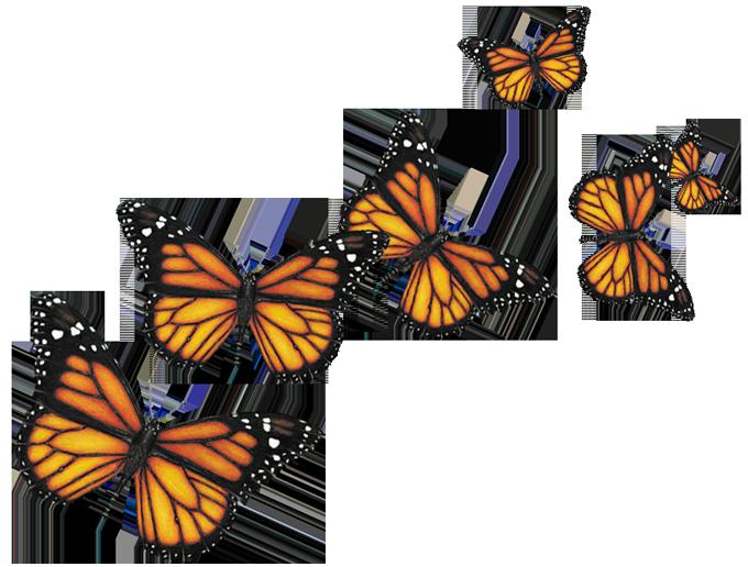 Many Butterflies Png 680 516 Monarch Beach Resort Monarch Beach Butterfly