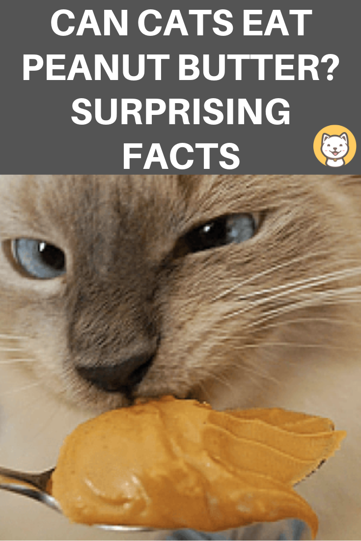 Can Cats Eat Peanut Butter? Surprising facts pet parents