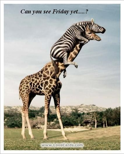 can you see friday yet? zebra giraffe | Silliness Wit Sarcasm