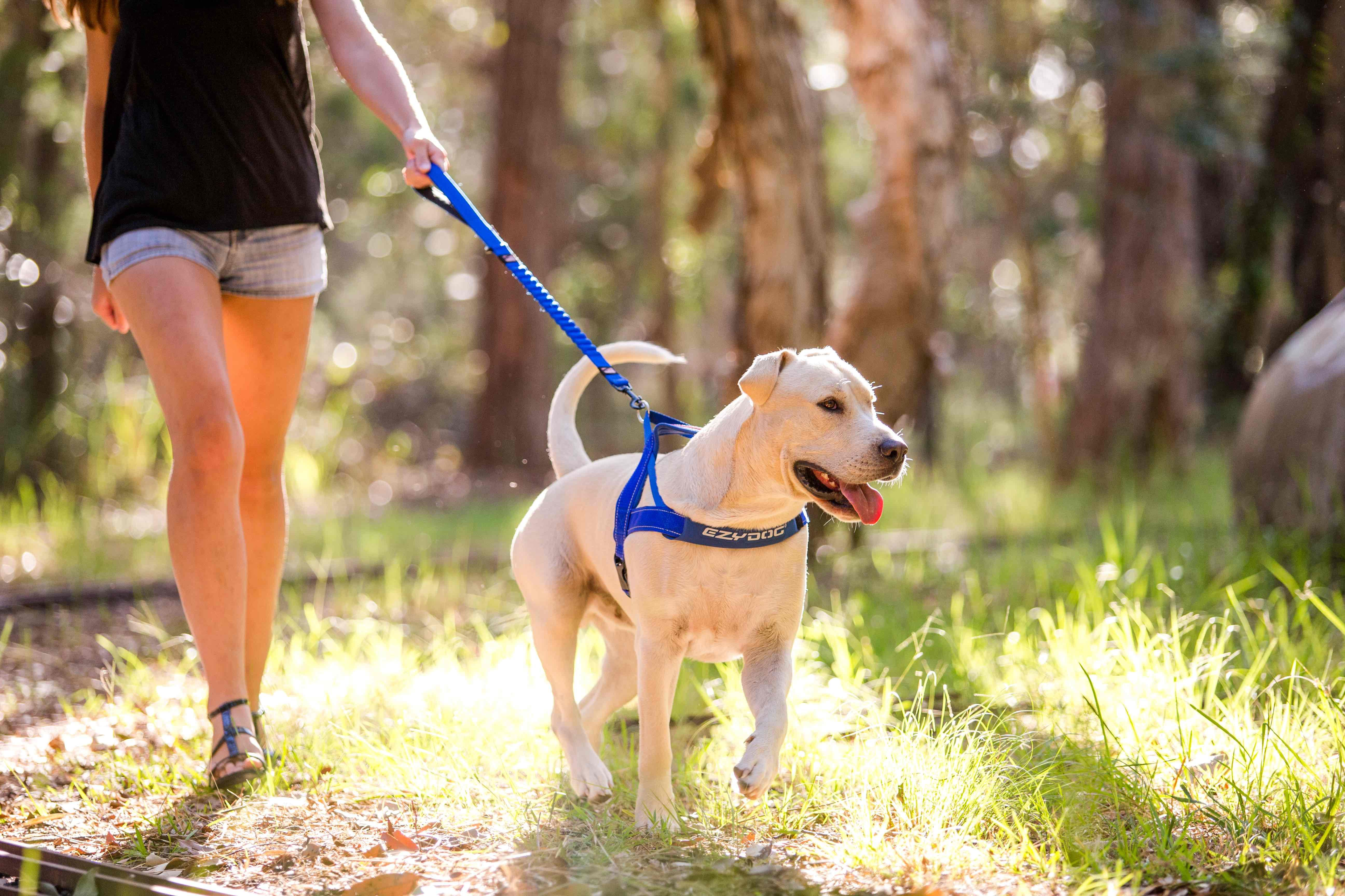 Ezydog Zero Shock Leash With Quick Fit Harness Dog Leash Dog