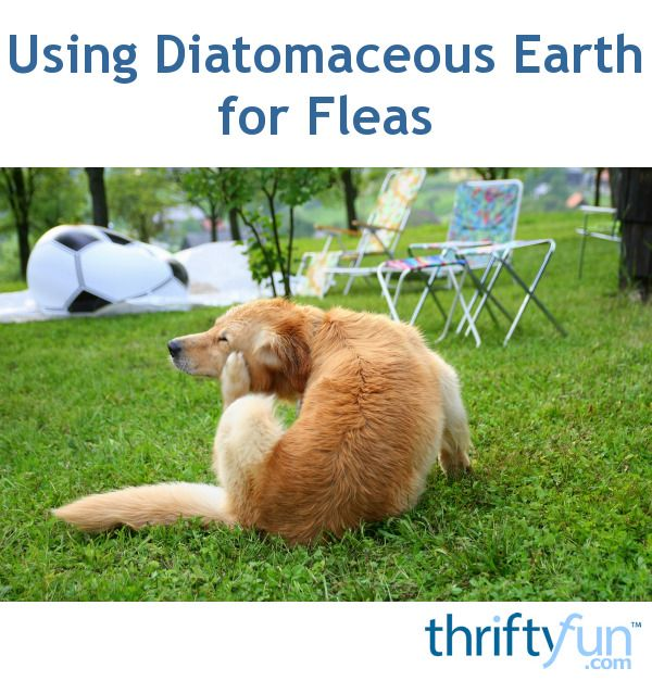 Using Diatomaceous Earth For Fleas