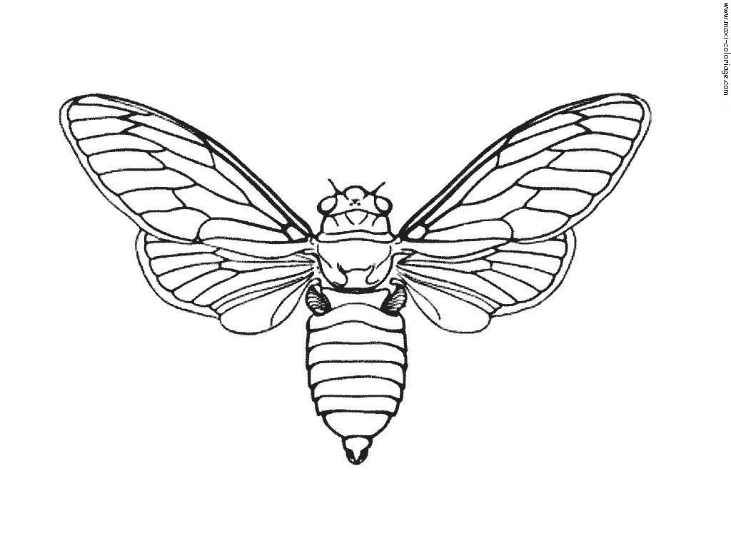 to print coloriage insectes 7 click on the printer icon at book activitiesmothembroidery