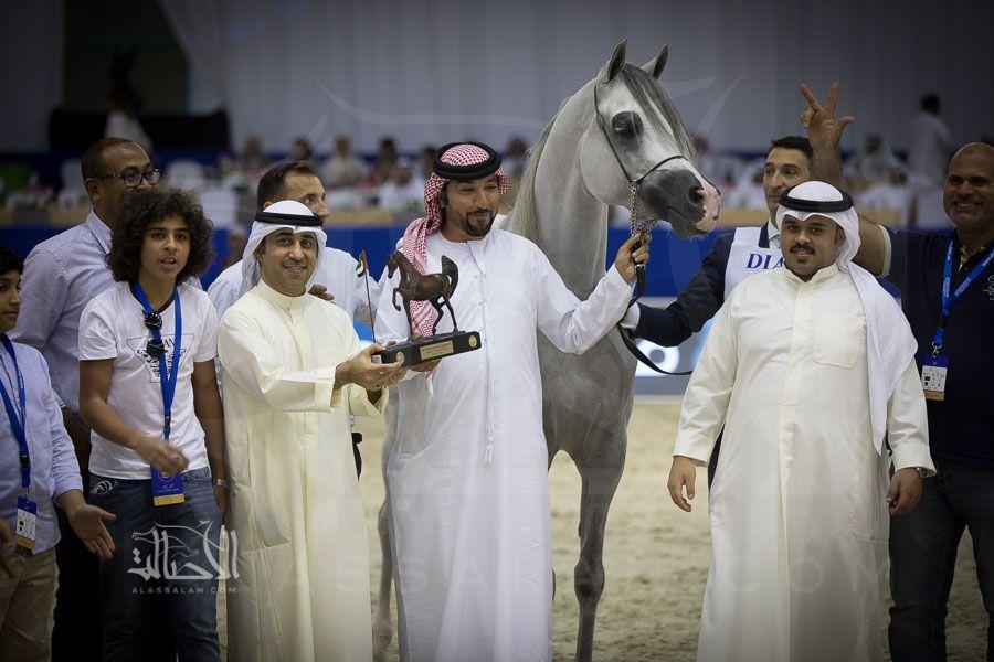 نتائج فئات اليوم الثاني لبطولة دبي الدولية للجواد العربي 2018 Arabian Horse Horses Coat