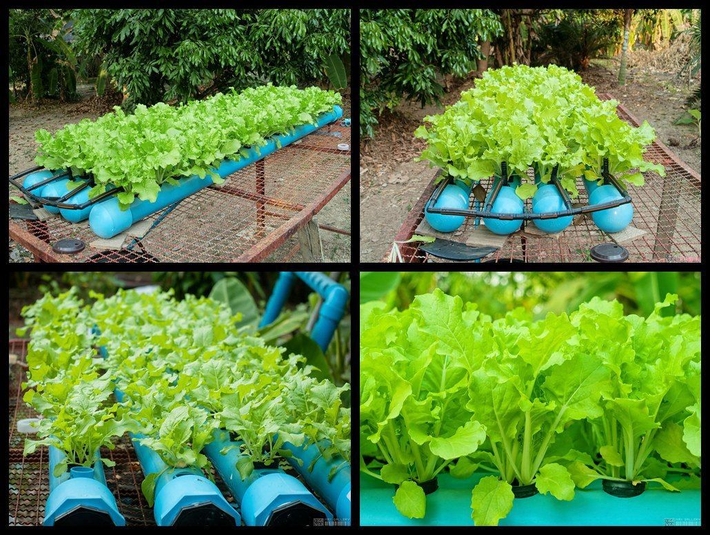hydroponics system guide u2013 grow box tutorial u2013 indoor gardening