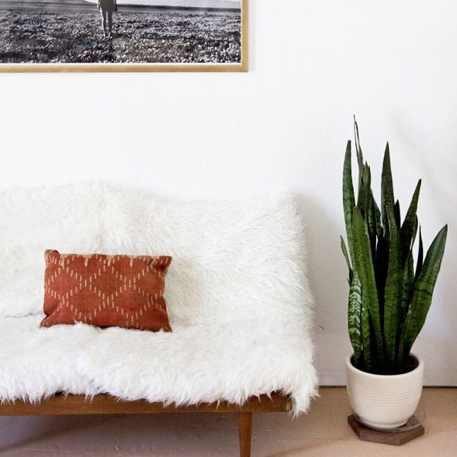 House Plants For Shady Rooms: 11 Crazy Cool House Plants Trending In 2016