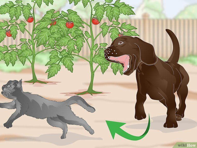 4 Formas de Afastar Gatos de um Jardim - wikiHow