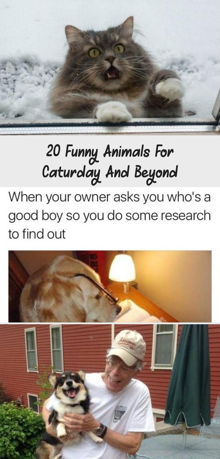 20 Funny Animals for Caturday and Beyond   #funnycats #funnyanimals #funnyanimalpics #animalpics #animalmemes #AnimalsDibujos #JungleAnimals #AmazingAnimals #AnimalsTattoo #AnimalsIlustrations