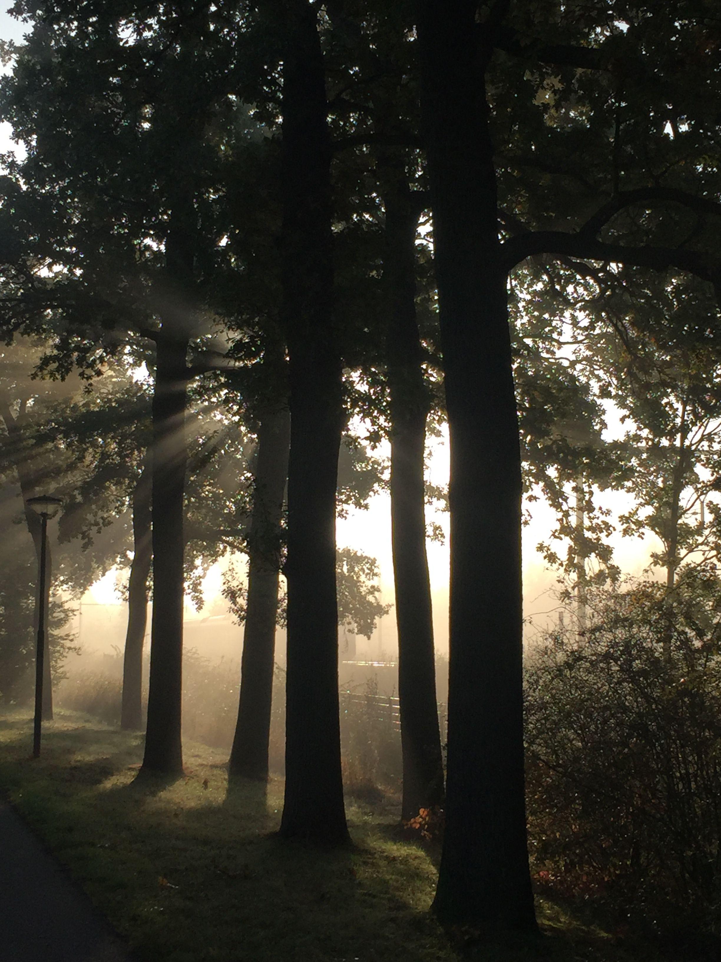 Herfstochtend in Rhijnauwen