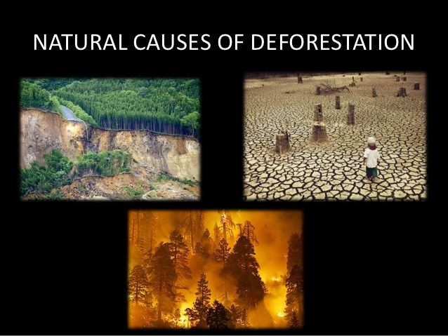 the causes and effects of deforestation in Deforestation in the brazilian amazon and its causes deforestation is the removal of a forest or stand of trees where the land is thereafter converted to a non rural use examples of deforestation consist of conversion of forestland to farms, ranches, or urban use.