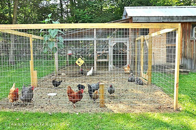 Life At Cobble Hill Farm: the Coop Girls