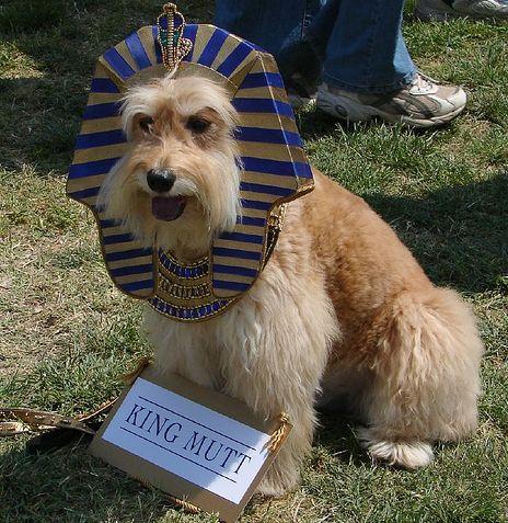 25 Creative Dog Costumes Best Dog Costumes