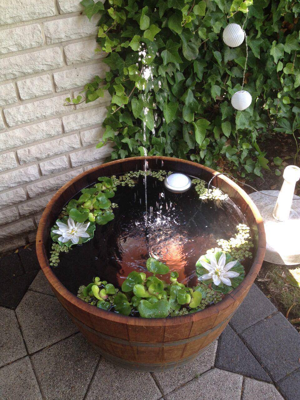 Miniteich Mit Springbrunnen Bepflanzung Wasser Im