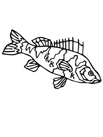 Perch Fish Coloring Page Sketch Coloring Page Fish Coloring Page Coloring Pages Free Printable Coloring Pages