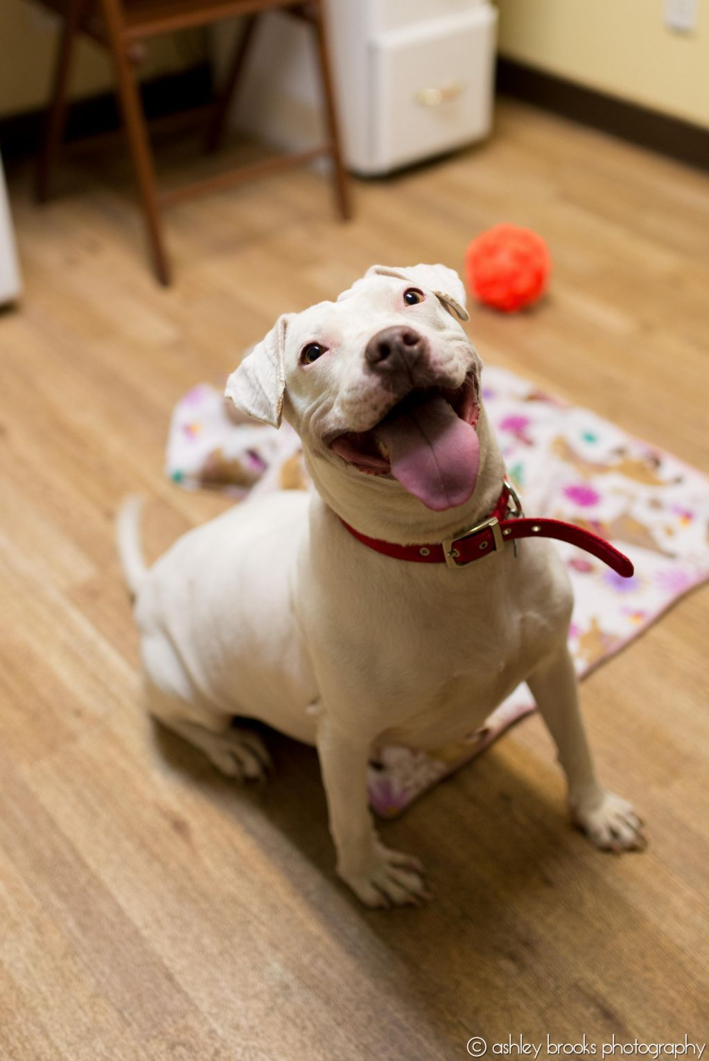 Adopt Nena On Adoption Dogs Terrier Mix Dogs