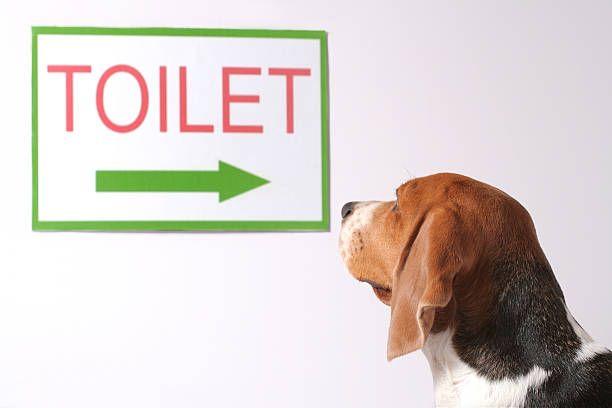Au secours, mon chien fait ses besoins dans la maison !   Formation de chiot