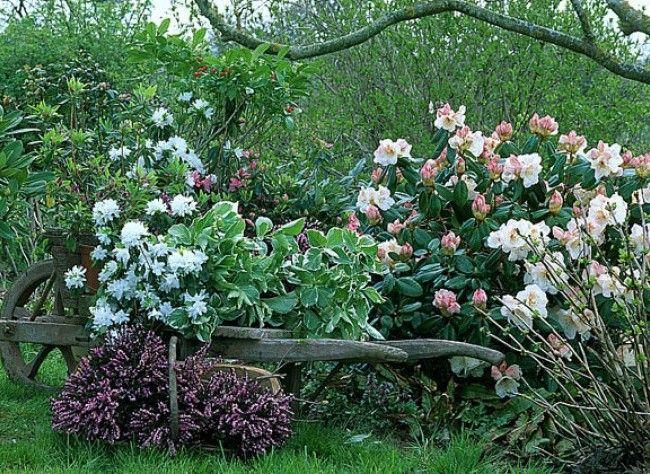 Quelles plantes choisir pour une bordure arbuste vivace et entretien for Choisir plantes jardin