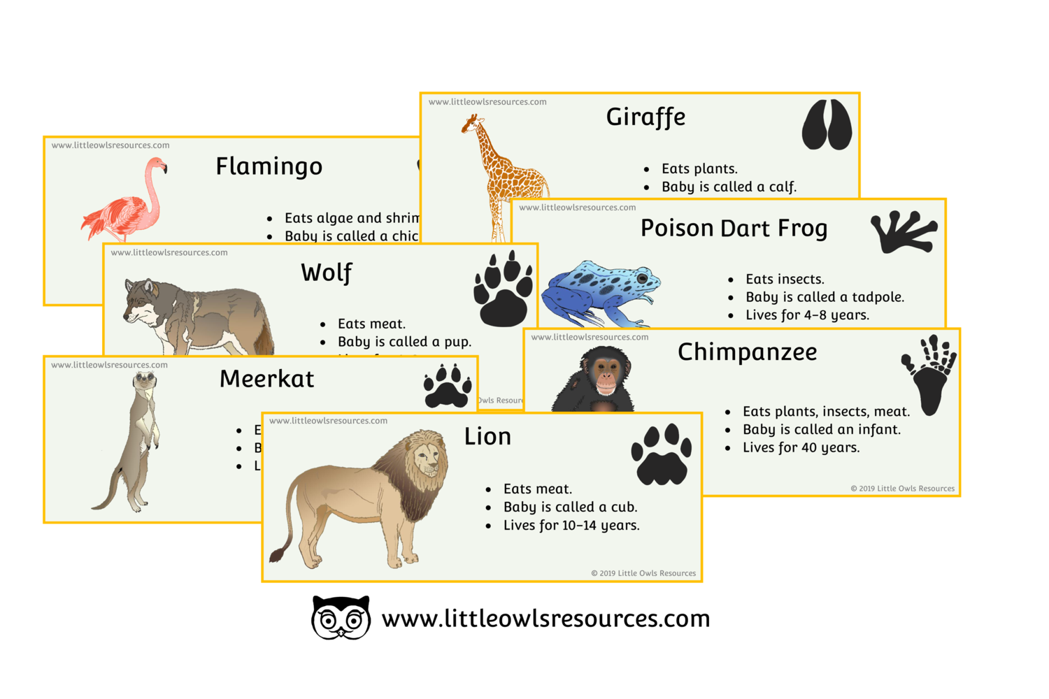 FREE Zoo Animal Fact Cards printable Early Years/EY (EYFS