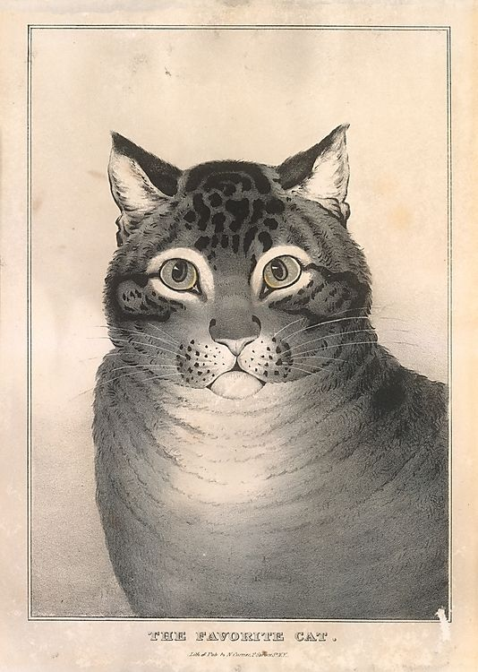 Lithographed and published by Nathaniel Currier  (American, 1813–1888) | The Favorite Cat | ca. 1840–50 | The Metropolitan Museum of Art, New York