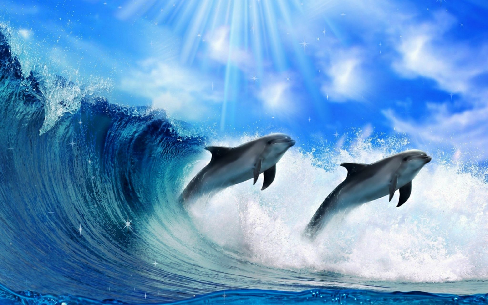 Dolphin Animated Wallpaper Dolphins Animal Underwater Wallpaper Dolphin Hd
