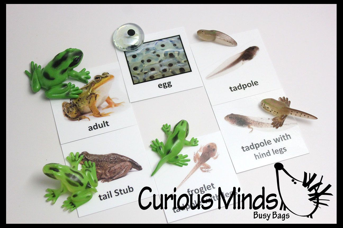 Frog Or Butterfly Life Cycle Learning Set