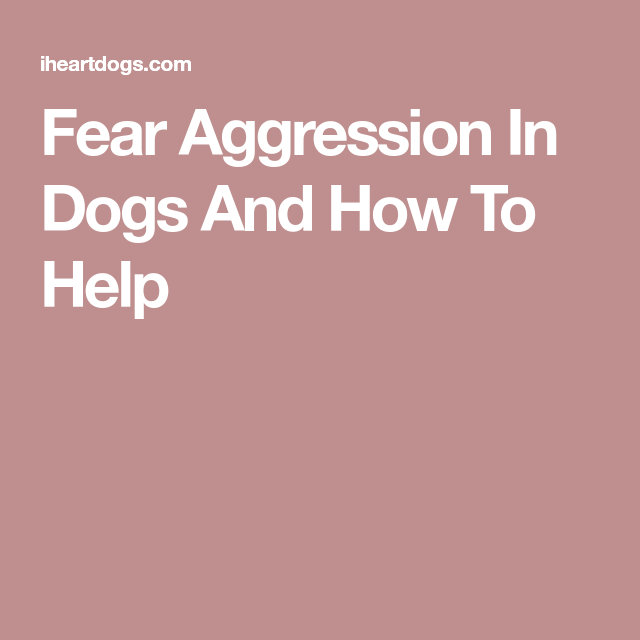 Fear Aggression In Dogs And How To Help